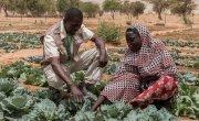 Chawada Aboubacar shows her vegetable garden to Concern staff member Mounkaîla Habibou. Photo: Apsatou Bagaya