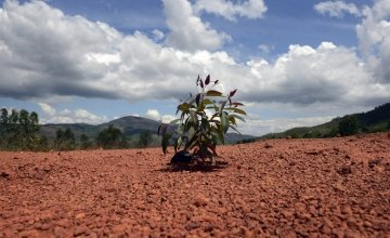 Soil erosion in Burundi. Photo: Chris de Bode/Panos Pictures / Concern Worldwide.
