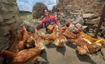 Lemlem Tesega sets the pecking order for her chickens in Ethiopia. Photo: Nick Spollin