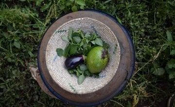 Amaranth leaves, an aubergine and an avocado grown in Esperence's kitchen garden