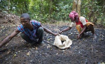 Assa Kamara and Marie Sasay collecting charcoal.