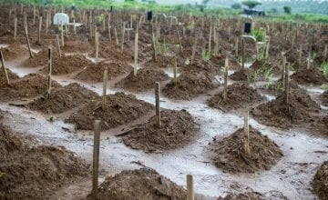 Some of the graves at Waterloo cemetery, just outside Freetown, the capital of Sierra Leone - one of two cemeteries in Western Area used for medical burials during the Ebola crisis. September, 2015. Photo: Kieran McConville, Concern Worldwide.