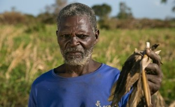 Ernesto Gambulene with the ruined maize crop from his field in Lamego, which was inundated by floodwaters from Cyclone Idai for nearly two weeks. Photo: Kieran McConville/Concern Worldwide.