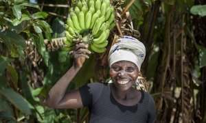 Meresiyana Cimpaye with the Banana Trees she bought from the profits of her Graduation Programme cash transfer, at her home in Bukinanyana, Cibitoke, Burundi. Photo: Abbie Trayler-Smith / Concern Worldwide