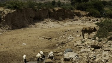 Communities face a battle with nature in drought-hit Somaliland