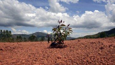 Soil erosion in Burundi. Photo: Chris de Bode/Panos Pictures / Concern Worldwide.