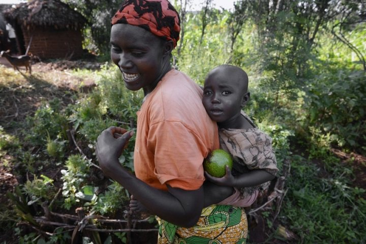 Mum-of-four Esperence Mutetiwabo (45) and her two-year-old daughter Delphine collect ripened avocados from their garden plot in Kirundo province, which has the highest childhood malnutrition levels in Burundi. Photo: Chris de Bode/Panos Pictures for Concern Worldwide