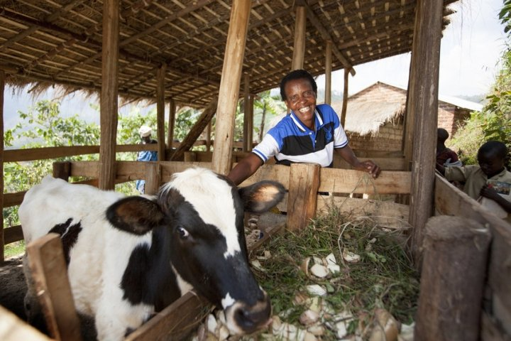 Violette Bukeyeneza (45) is a single mum of eleven a beneficiary of the Graduation programme. Her business has gone from strength to strength. She bought one-year-old cow three months ago at a cost of 550,000BIF. Photographed at her home in Bukinanyana, Cibitoke, Burundi. Photo: Abbie Trayler-Smith / Concern Worldwide