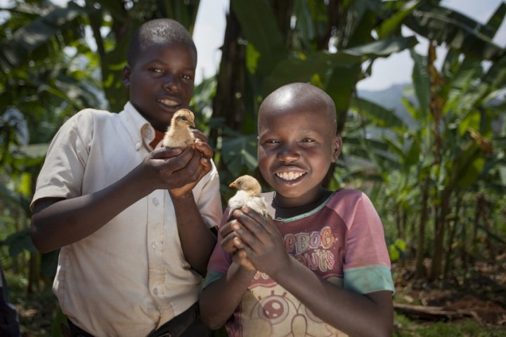 Kevin Niyomuhoza (6) and Olivier Iranyumviye (10) sons of Alphonsine Niyonzima (21) with the chickens they have bought with the profits of her business, thanks to investment from the Graduation Programme. At their home in Mabayi, Cibitoke. Photo: Abbie Trayler-Smith / Concern Worldwide