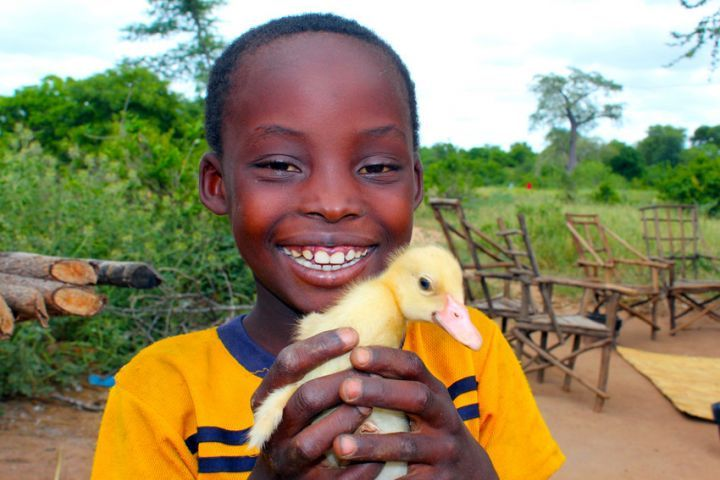 Nhkonde, eight, shows off one of his newly hatched ducklings in Malawi. Photo: Jason Kennedy / Concern Worldwide