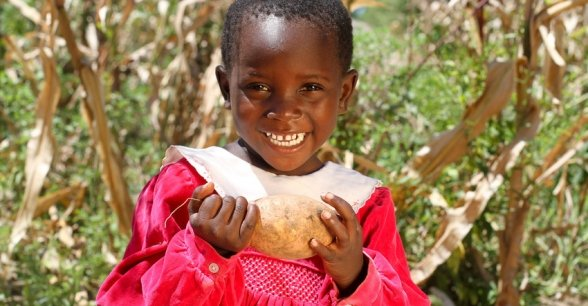 Winnie Banda holds sweet potatoes, Malawi. Photo: Jennifer Nolan / Concern Worldwide.