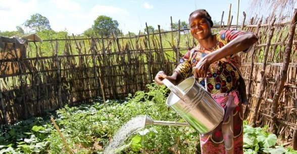 Marita Kafera waters her kitchen garden, Malawi. Photo: Jennifer Nolan / Concern Worldwide.