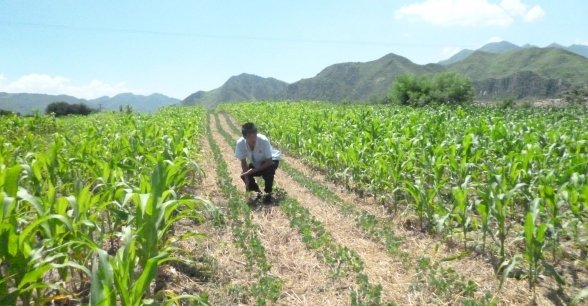 Conservation Agriculture at work in DPRK. Photo: Concern Worldwide.