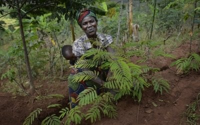 Marie Therese Barampama checks on the calliandra and leucaena saplings she recently planted, along with her 15-month old daughter Charite. Photo: Chris de Bode