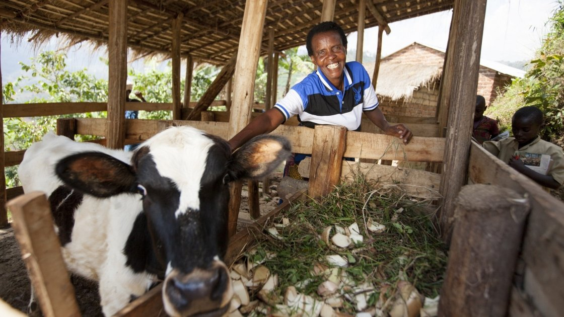 Violette Bukeyeneza is a single mum and a beneficiary of the Graduation programme. She bought one-year-old cow three months ago. Photo: Abbie Trayler-Smith
