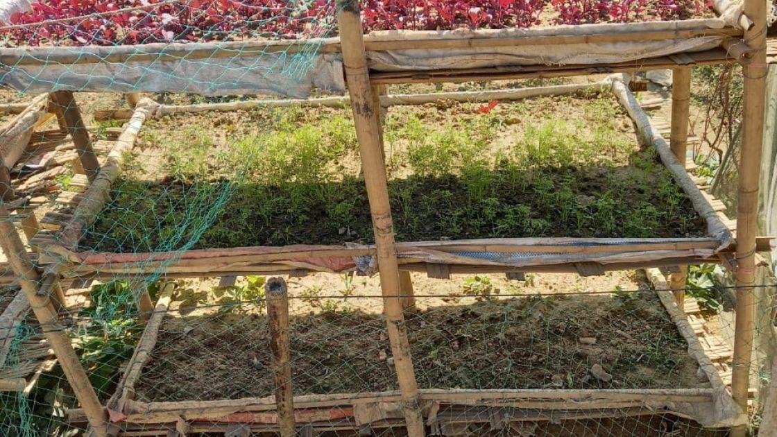 Multilayer garden in Cox's Bazar, Bangladesh