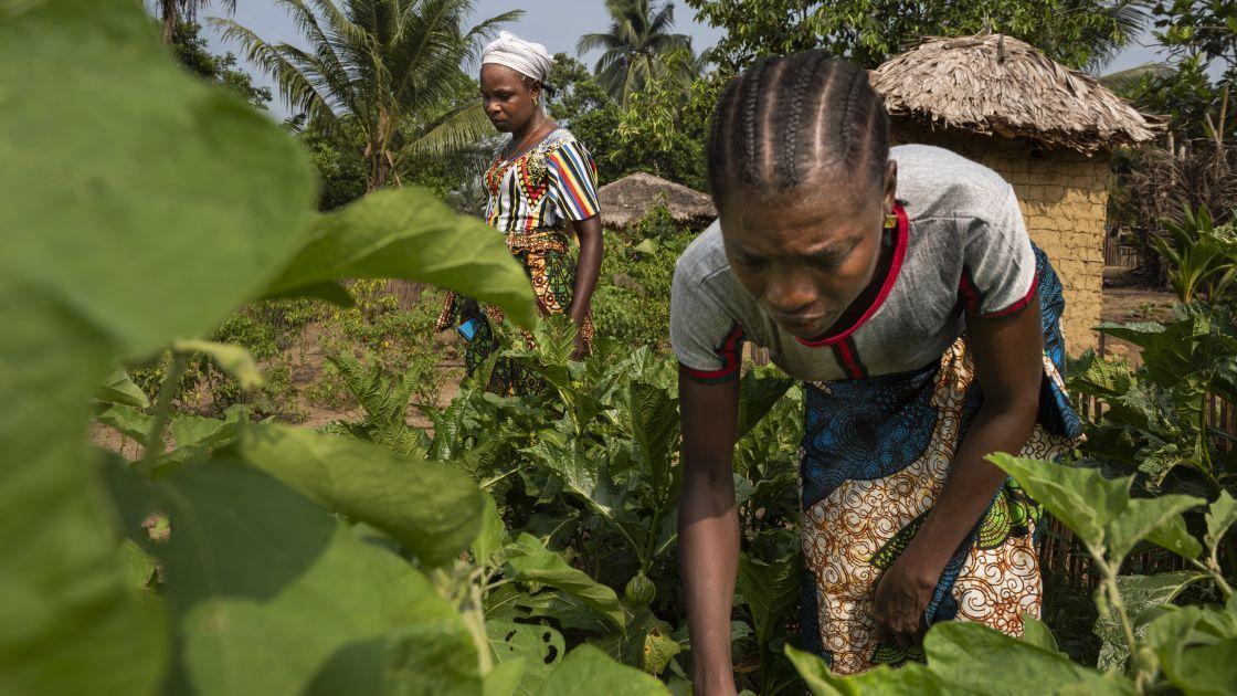 A family grows their own vegetables in a home garden