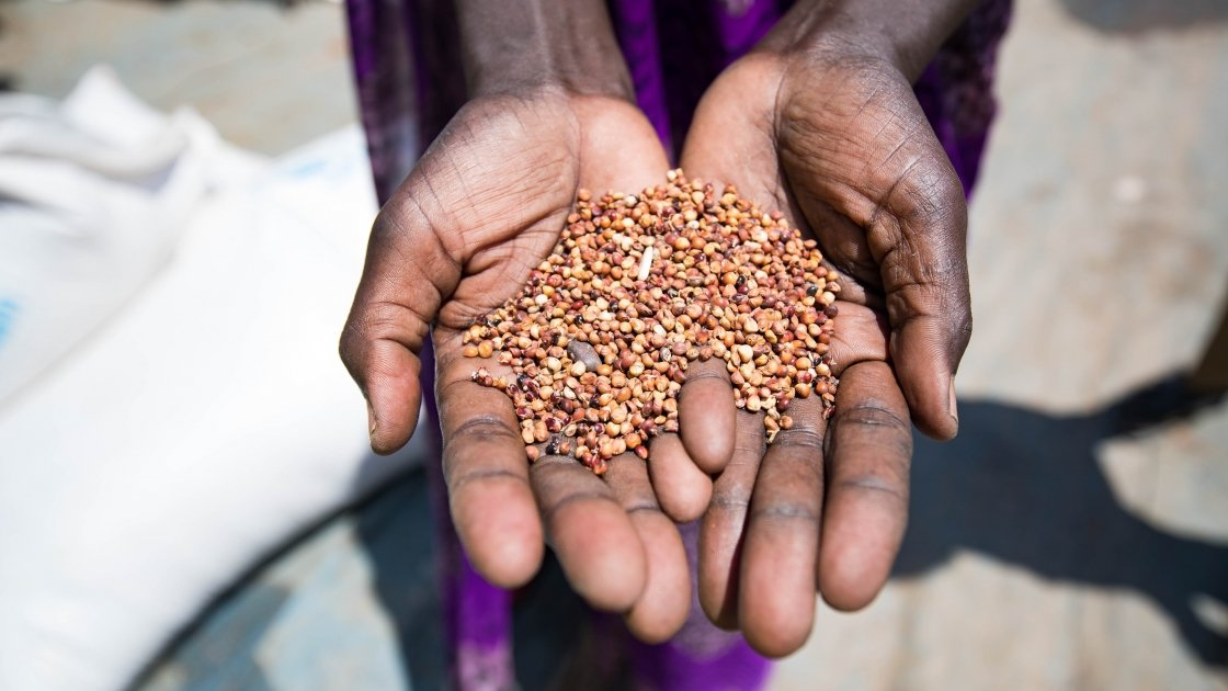 A beneficiary holds up grains provided by the WHO and distributed by Concern Worldwide. Photo: Steve De Neef / Concern Worldwide.