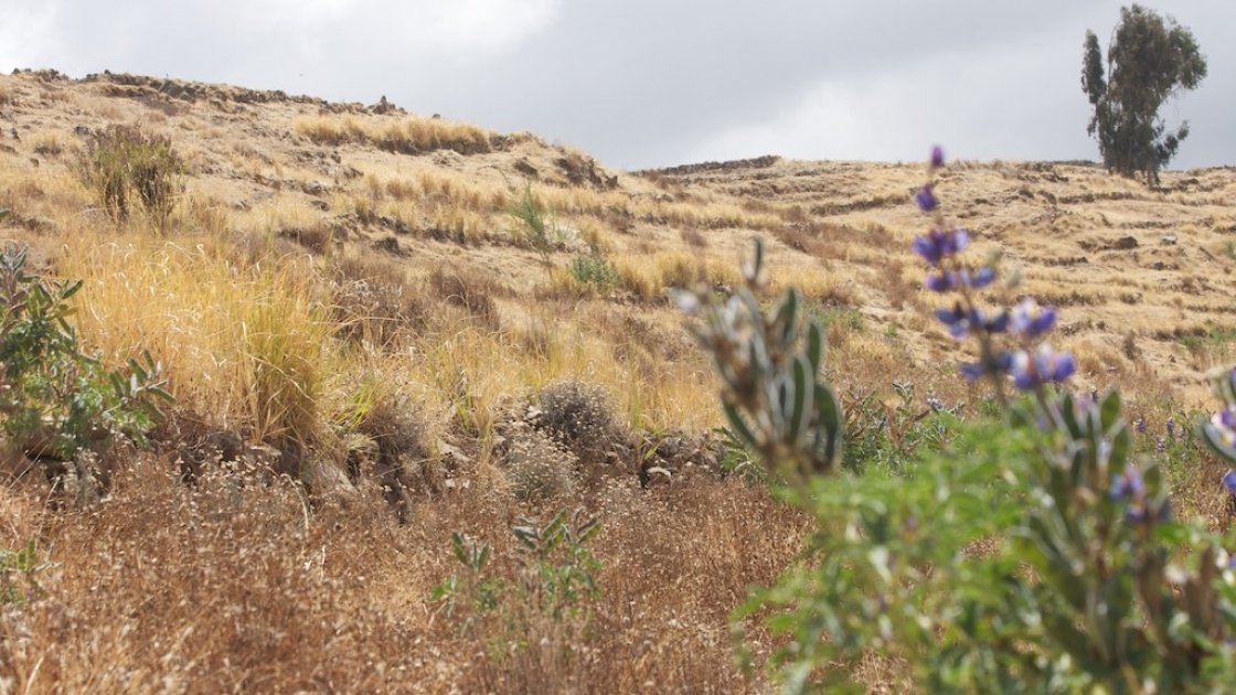 A slope in Dessie Zuria, Amhara, Ethiopia, which has been terraced, planted with leguminous and fodder crops, and open grazing prohibited as part of a broader watershed management initiative within a community resilience building programme. Photo: Dom Hunt.