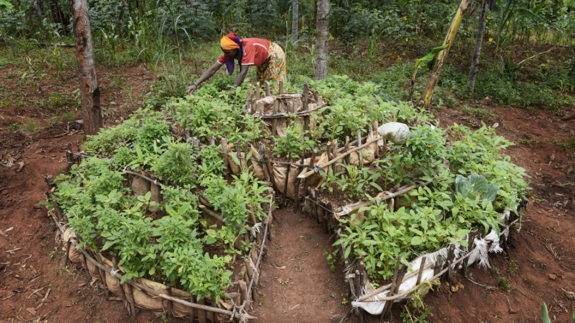 Victoria Macumi tending to her kitchen garden in Burundi