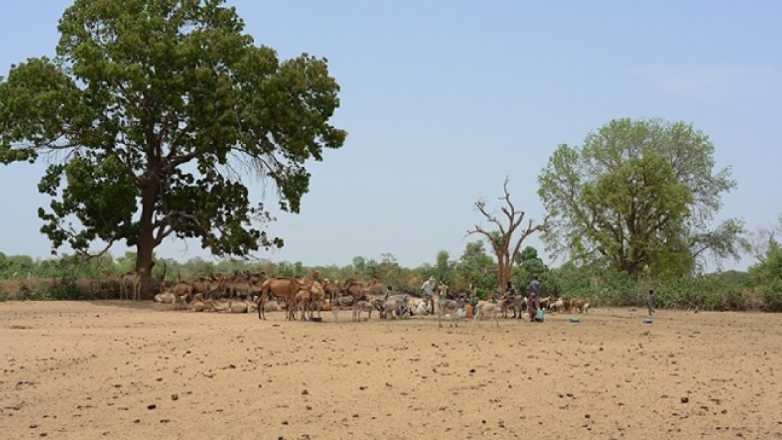 Pastoralism is a very efficient way of using scarce natural resources. Photo: Connell Foley / Concern Worldwide, Dar Sila region, Eastern Chad, 2017.