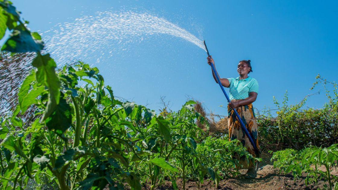 Queen (36) waters her vegetable garden in Zambia. Photo: Gareth Bentley.
