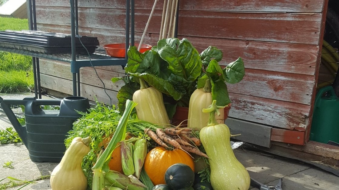 Despite taking on an overgrown plot, Tracey managed a great harvest in her first year