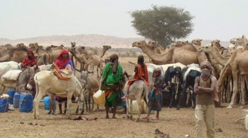 Herds gather around a watering point in West Darfur Sudan. Photo: Hussein Sulieman.