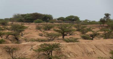 The harsh, arid landscape between Hargeisa and Borama.