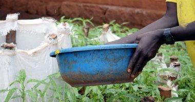 Kitchen garden in Burundi