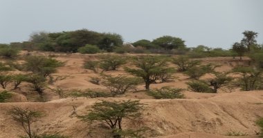 The harsh landscape between Hargeisa and Borama. Photo: Eamon Timmins/Concern Worldwide