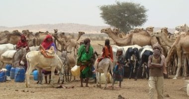 Herds gather around a watering point in West Darfur Sudan. Photo: Hussein Sulieman.
