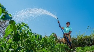 Crops are watered. Central African Republic. Photo: Kieran McConville/Concern Worldwide