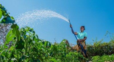 Crops are watered. Photo: Kieran McConville