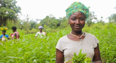 Kadiatu Conteh picking amaranth leaves in the community vegetable garden. She is part of the Tawopaneh (let's hold ourselves together) Women's Group. The LAAN or Linking Agriculture, Natural Resource Management and Nutrition programme is run by Concern Worldwide and Welthungerhilfe.