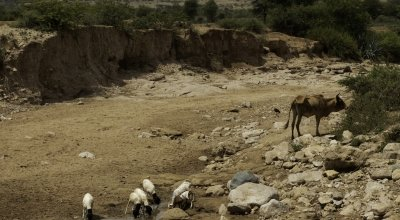 A dried up river bed near Carracad, in western Somaliland. Usually the river flows during the wet 'Gu' season. However, reduced and failed rains in 2019 have left cattle and goats and local villagers to depend on a local well. Photo: Eamon Timmins/Concern Worldwide