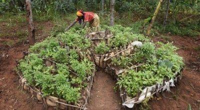 Victoria Macumi tending to her kitchen garden in Burundi